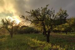 Primavera Venta Gaeta